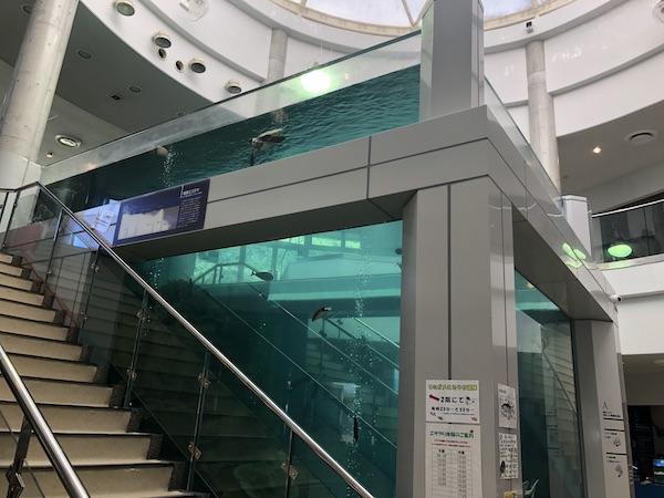 奄美海洋展示館の大水槽